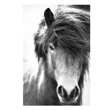 Leinwandbild - Island Pferd in Schwarz-weiß - Querformat 2:3