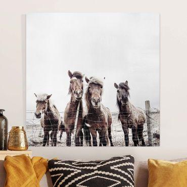 Leinwandbild - Island Pferde - Quadrat 1:1