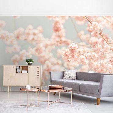 Fototapete - Kirschblüten Glow
