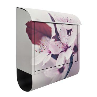Briefkasten - Kirschblütenzweig Altrosa