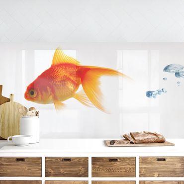 Küchenrückwand - Goldfisch