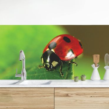 Küchenrückwand - Lady Bird