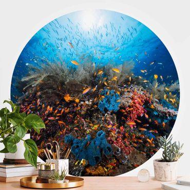Runde Tapete selbstklebend - Lagune Unterwasser