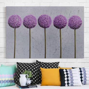 Leinwandbild - Allium Kugel-Blüten - Quer 3:2