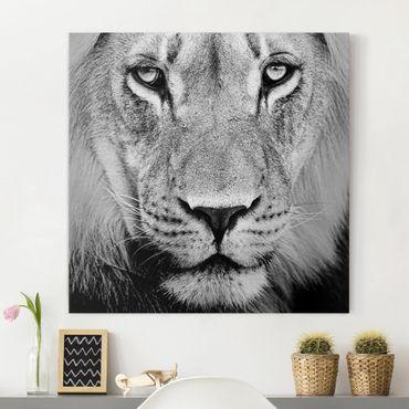 Leinwandbild Schwarz-Weiß - Alter Löwe - Quadrat 1:1