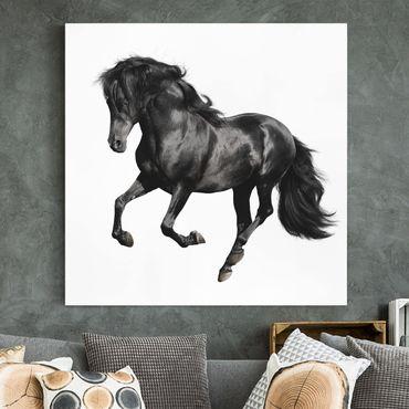 Leinwandbild Pferd Schwarz-Weiß - Araberhengst - Quadrat 1:1