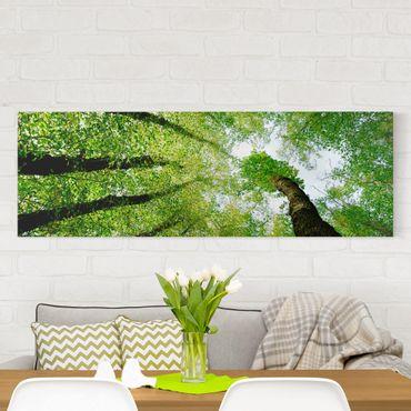Leinwandbild - Bäume des Lebens - Panorama Quer