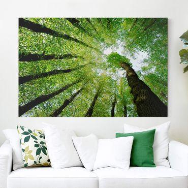 Leinwandbild - Bäume des Lebens - Quer 3:2
