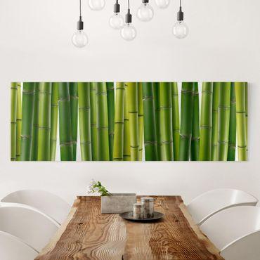 Leinwandbild - Bambuspflanzen - Panorama Quer