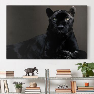 Leinwandbild - Black Puma - Quer 3:2