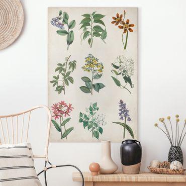 Leinwandbild - Botanische Schautafel I - Hochformat 3:2