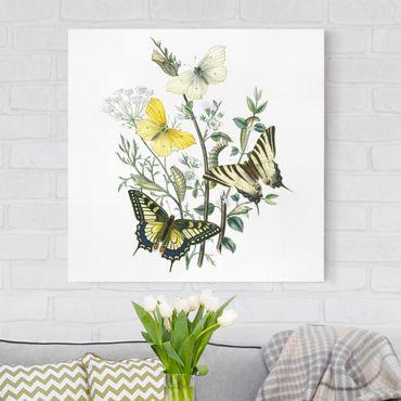 Leinwandbild - Britische Schmetterlinge III - Quadrat 1:1