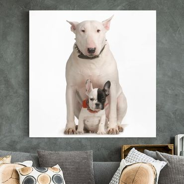 Leinwandbild - Bull Terrier and friend - Quadrat 1:1