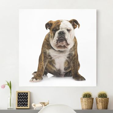Leinwandbild - Bulldogge - Quadrat 1:1