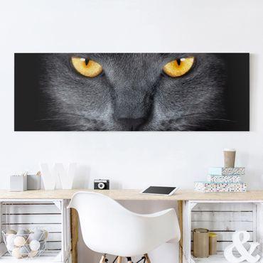 Leinwandbild - Cats Gaze - Panorama Quer