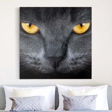 Leinwandbild - Cats Gaze - Quadrat 1:1
