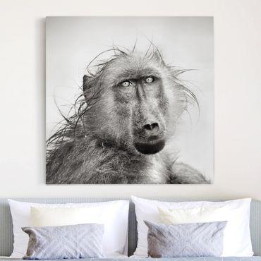 Leinwandbild Schwarz-Weiß - Crying Baboon - Quadrat 1:1
