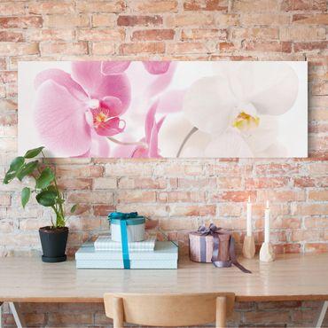 Leinwandbild - Delicate Orchids - Panorama Quer