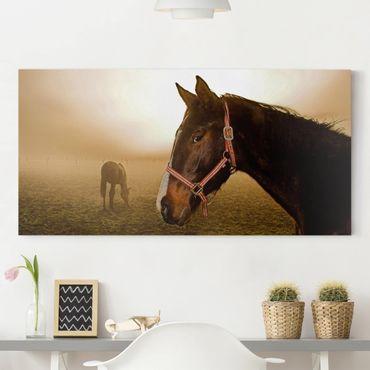 Leinwandbild - Early Horse - Quer 2:1