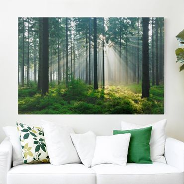 Leinwandbild - Enlightened Forest - Quer 3:2