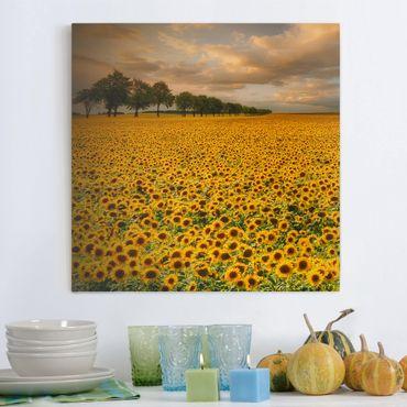 Leinwandbild - Feld mit Sonnenblumen - Quadrat 1:1
