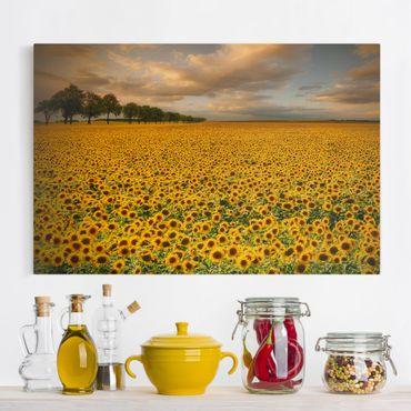 Leinwandbild - Feld mit Sonnenblumen - Quer 3:2