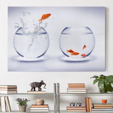 Leinwandbild - Flying Goldfish - Quer 3:2
