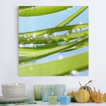Leinwandbild - Fresh Green - Quadrat 1:1