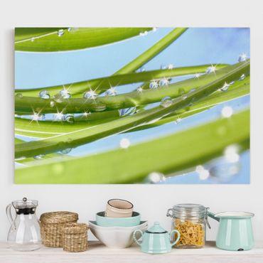 Leinwandbild - Fresh Green - Quer 3:2