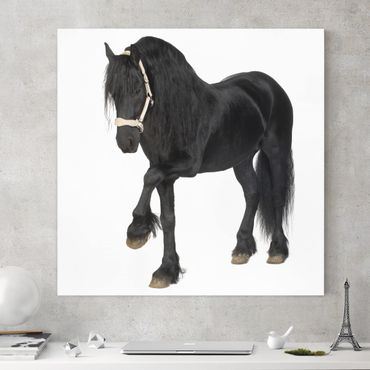Pferde Leinwandbild Schwarz-Weiß - Friesenstute - Quadrat 1:1