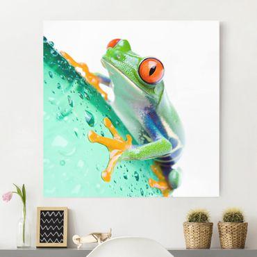 Leinwandbild - Frog - Quadrat 1:1