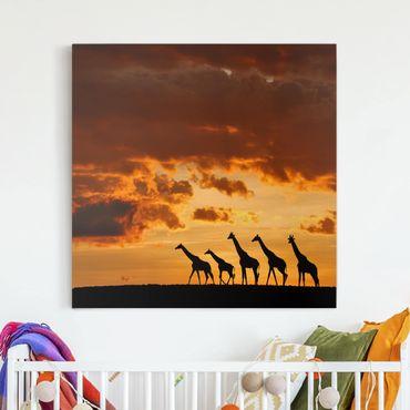 Leinwandbild - Fünf Giraffen - Quadrat 1:1