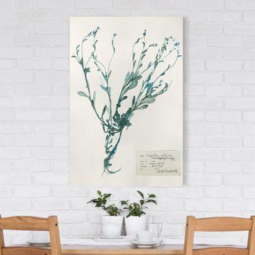 Leinwandbild - Gepresste Blumen - Vergissmeinnicht - Hochformat 3:2