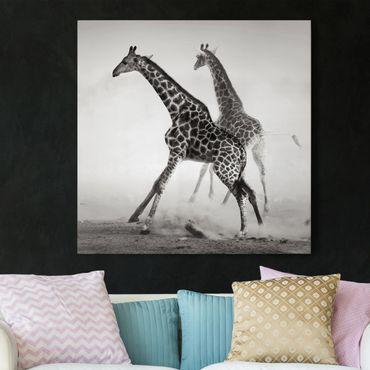 Leinwandbild Schwarz-Weiß - Giraffenjagd - Quadrat 1:1