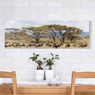 Afrika Leinwandbild Gnuherde in der Savanne - Panorama Quer