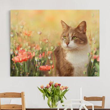 Leinwandbild - Katze im Mohnfeld - Quer 4:3
