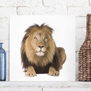 Leinwandbild - König Löwe II - Quadrat 1:1