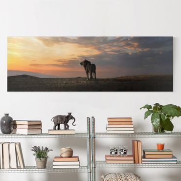 Leinwandbild - Löwe im Sonnenuntergang - Panorama Quer