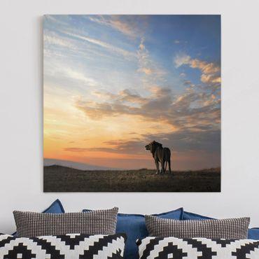 Leinwandbild - Löwe im Sonnenuntergang - Quadrat 1:1