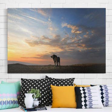 Leinwandbild - Löwe im Sonnenuntergang - Quer 3:2