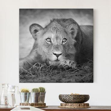 Leinwandbild Schwarz-Weiß - Lurking Lionbaby - Quadrat 1:1