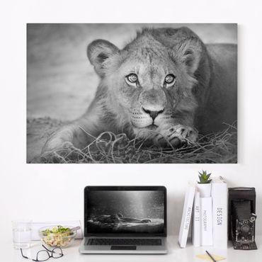 Leinwandbild Schwarz-Weiß - Lurking Lionbaby - Quer 3:2