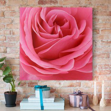 Leinwandbild - Lustful Pink Rose - Quadrat 1:1