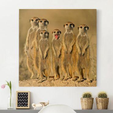 Leinwandbild - Meerkat Family - Quadrat 1:1