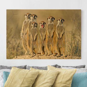 Leinwandbild - Meerkat Family - Quer 3:2