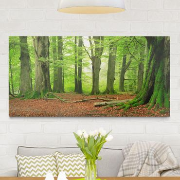 Leinwandbild Wald Mighty Beech Trees - Quer 2:1