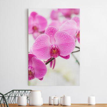 Leinwandbild - Nahaufnahme Orchidee - Hoch 2:3