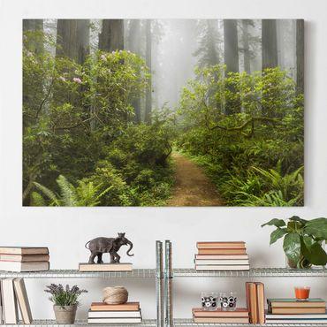 Leinwandbild - Nebliger Waldpfad - Quer 3:2