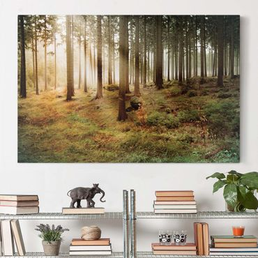 Leinwandbild - No.CA48 Morning Forest - Quer 3:2