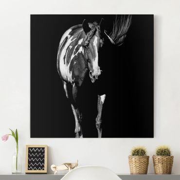 Leinwandbild - Pferd vor Schwarz - Quadrat 1:1
